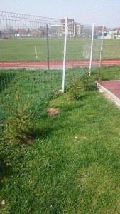 arbori rupti 5