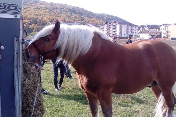 Galerie foto de la concursul de cai organizat in Floresti